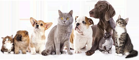 Clinica veterinară Nord Vet  îți garantează siguranța animalului tău de companie